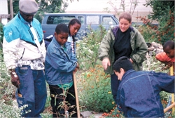 Group planting garden in East New York City